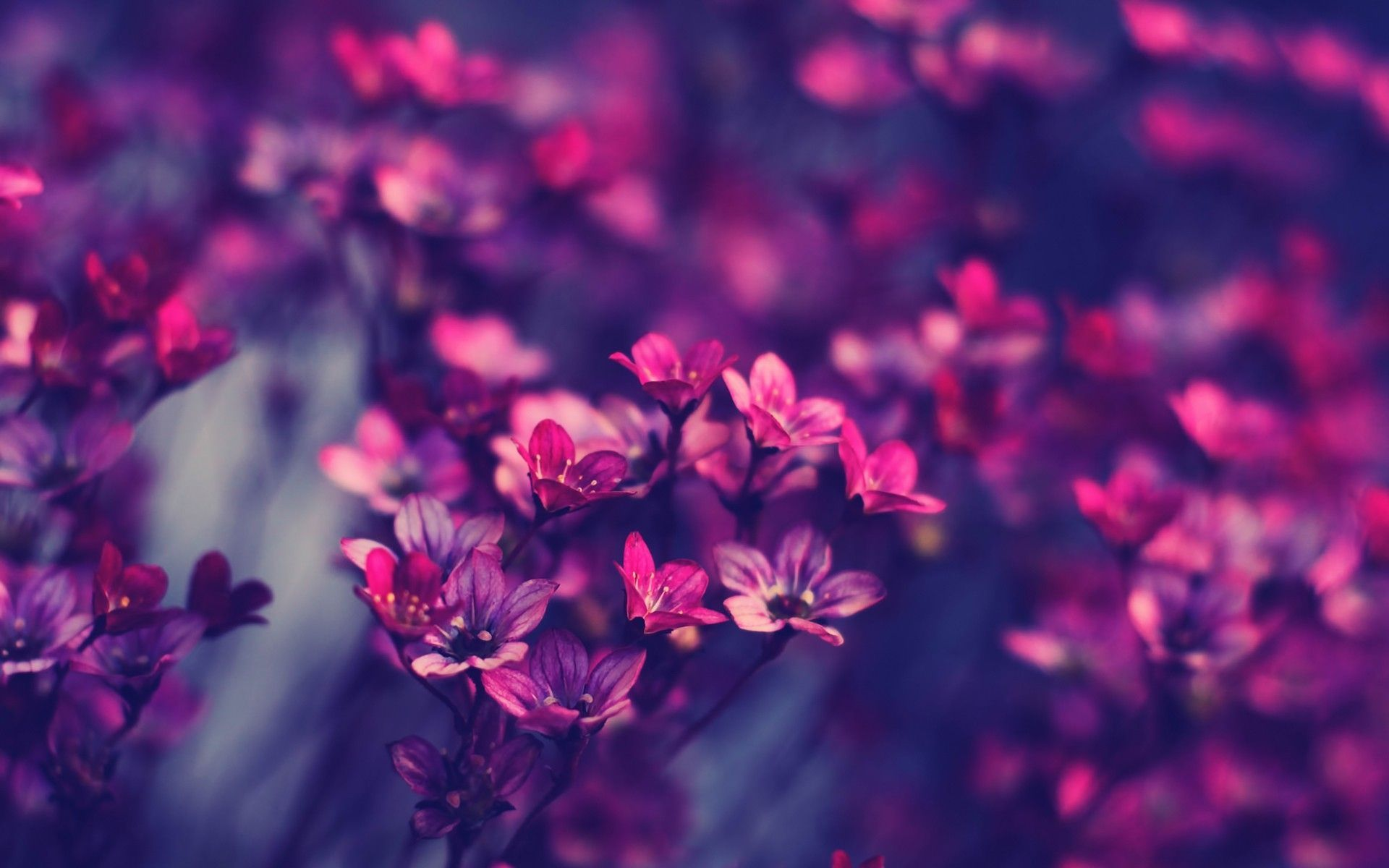1920x1200 Viewing Gallery For - Pretty Roses Tumblr | Flowers ♥ | Pinterest ...