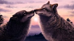 Love Wolf Wallpapers – Top Free Love Wolf Backgrounds