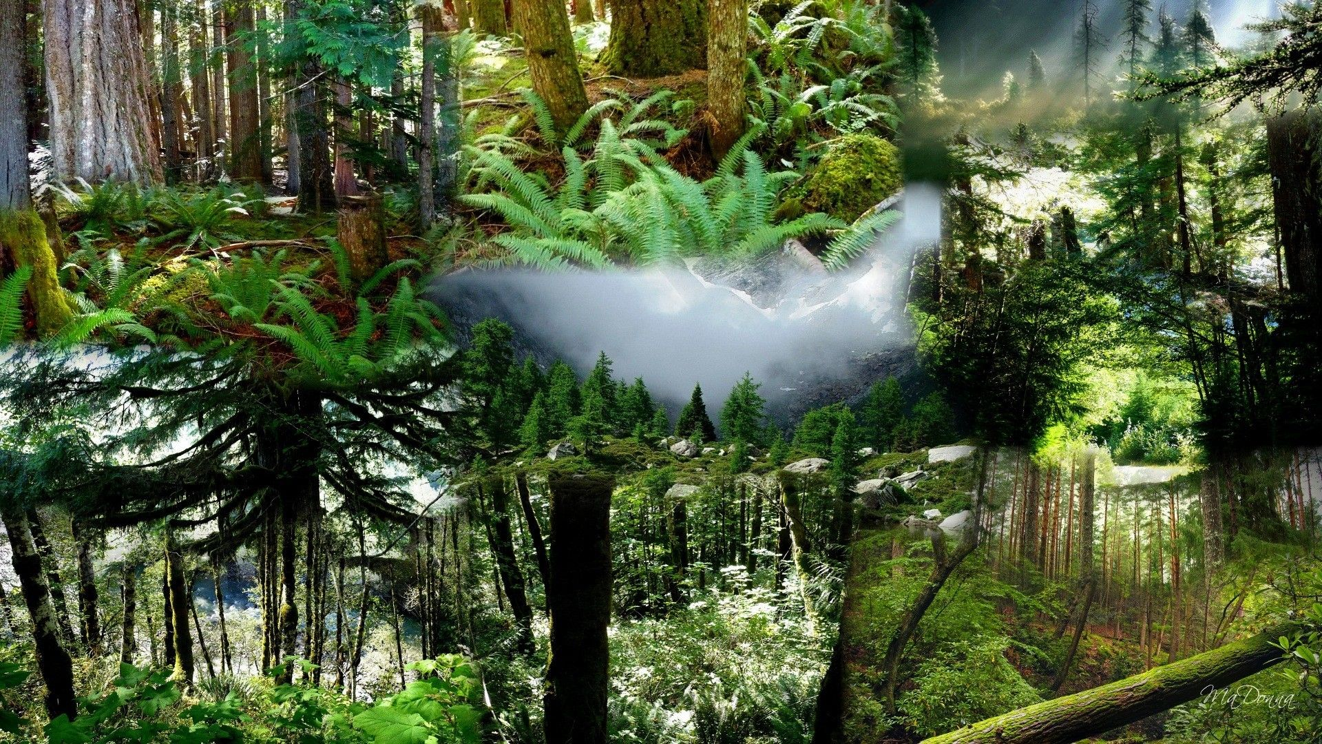 1920x1080 Forest: Pacific Northwest Forests Forest Snow Mountains Collage Mist ...