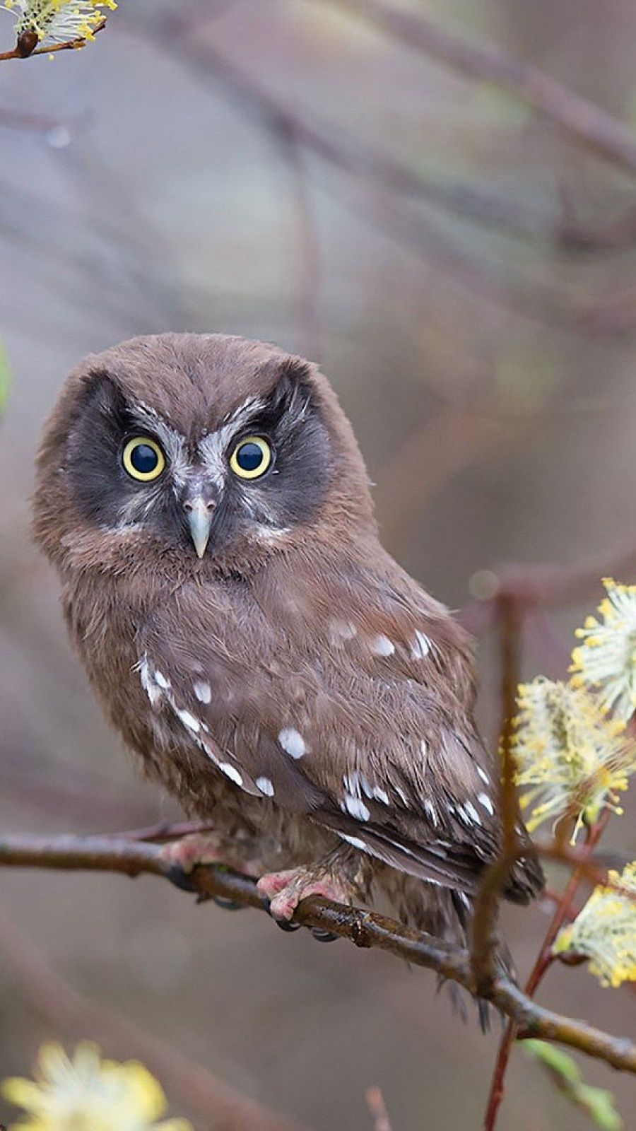 900x1600 Branches Nature Bird Owl Mobile Wallpaper - Mobiles Wall