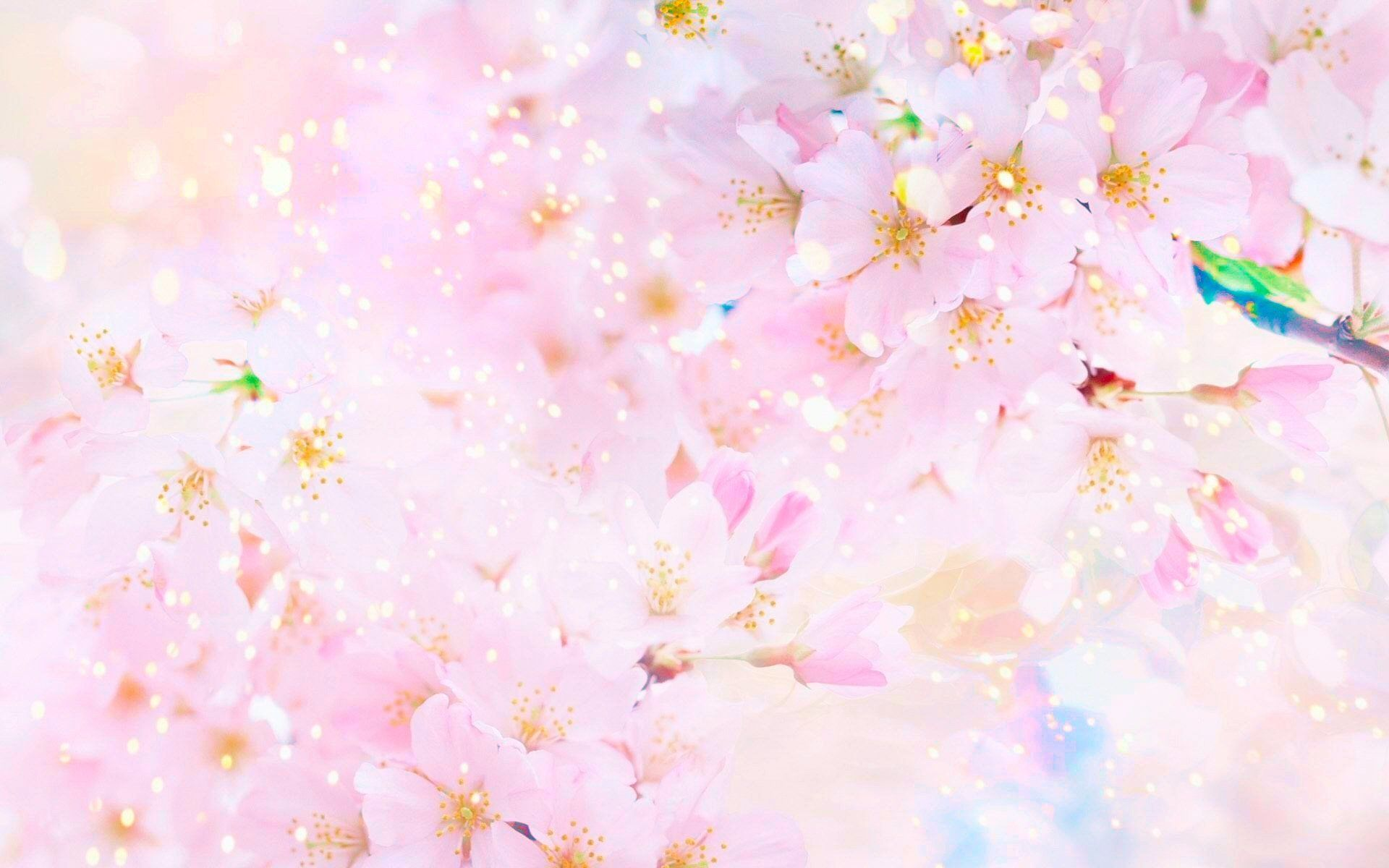 1920x1200 108 Sakura HD Wallpapers | Background Images - Wallpaper Abyss