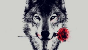 Red Wolf iPhone Wallpapers – Top Free Red Wolf iPhone Backgrounds
