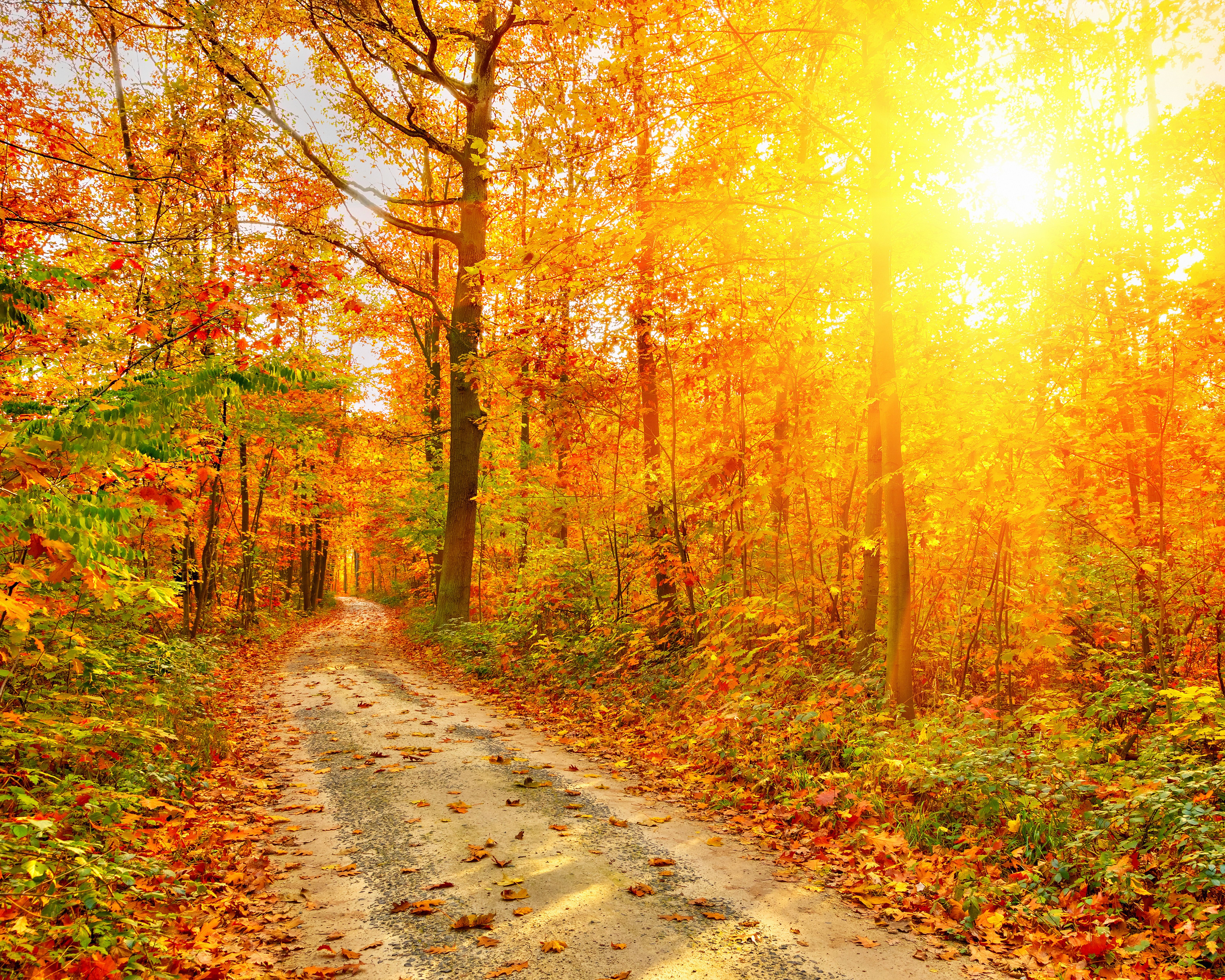 6000x4800 Picture Rays of light Foliage Nature Autumn Roads Forests 6000x4800