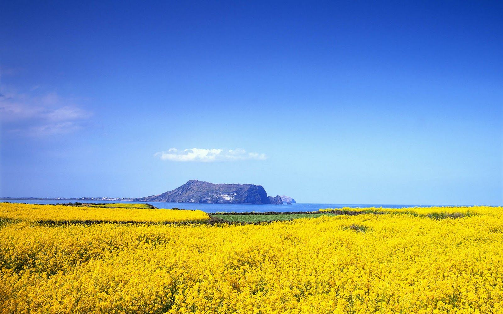 1600x1000 JEJU ISLAND is one of the best place where korean want to visit in ...