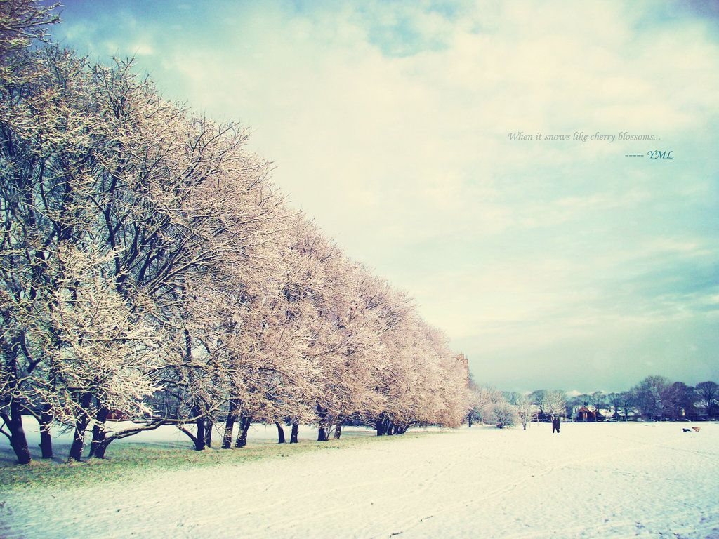 1024x768 When Snow Falls Like Cherry Blossoms by watermelon-riceball on ...