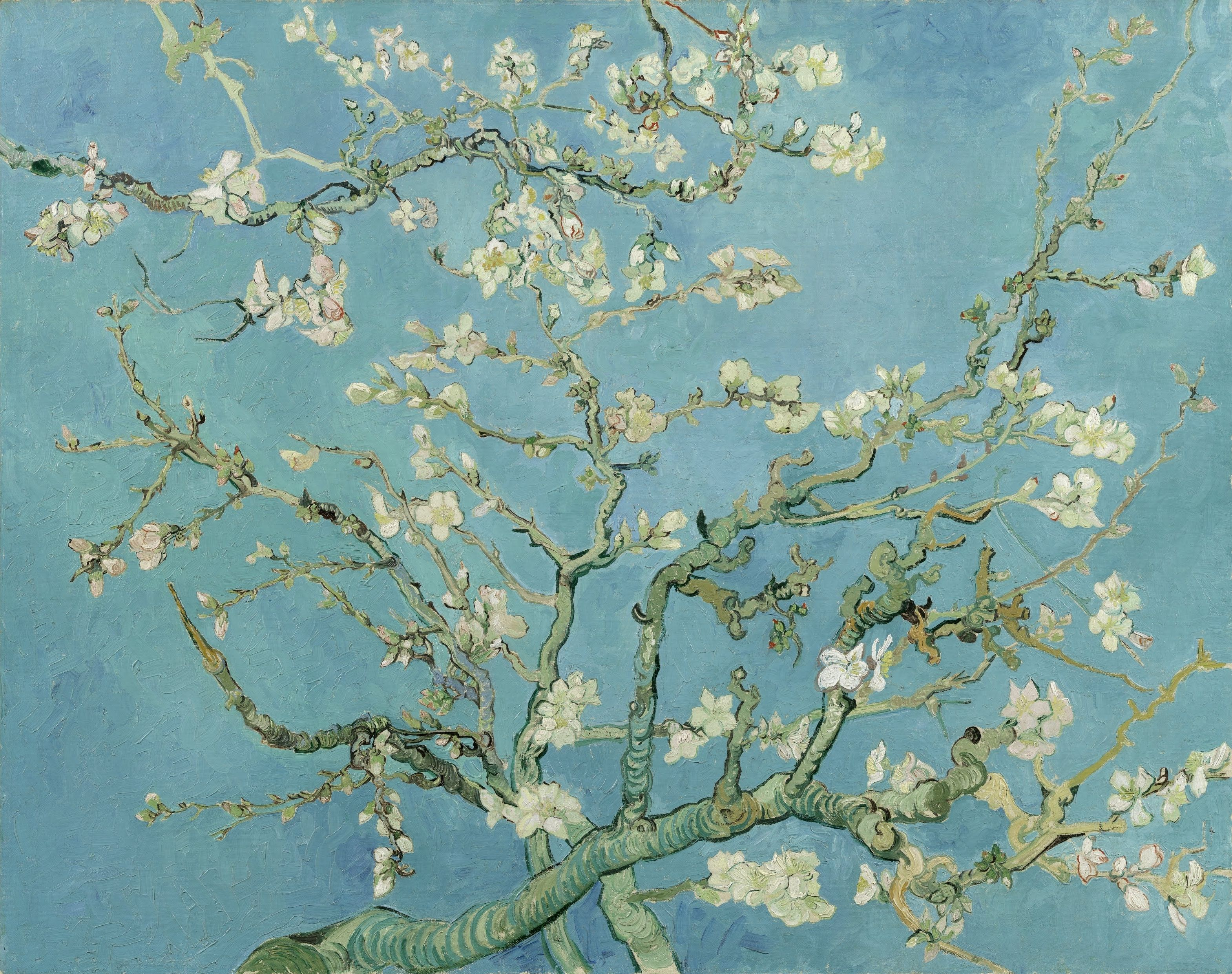 3139x2480 15 Best Collection of Almond Blossoms Vincent Van Gogh Wall Art