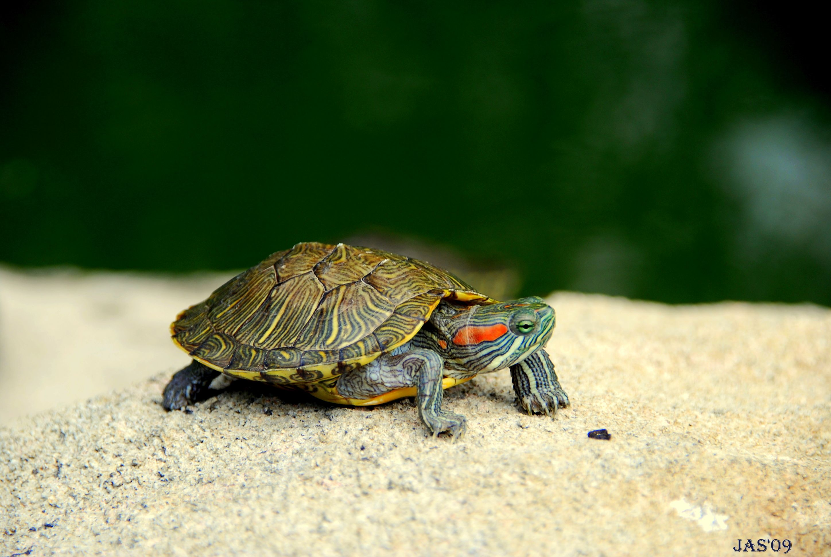 2896x1944 MX-78 Turtle Wallpapers, Turtle Adorable Desktop Pics for Free | 35+