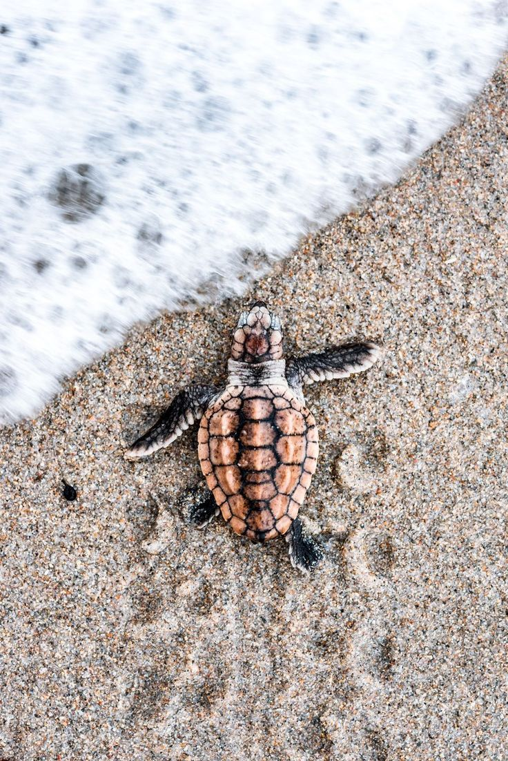 736x1102 1872 best Turtles...Land & Sea images on Pinterest | Baby animals ...