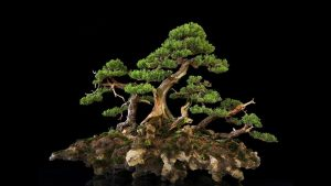 Bonsai Desktop Wallpapers – Top Free Bonsai Desktop Backgrounds
