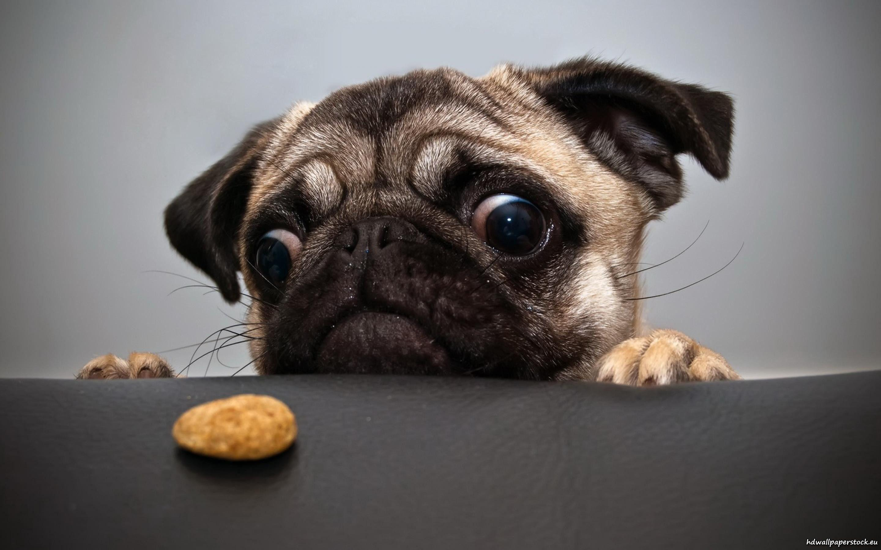 2880x1800 Funny Dog Wallpapers