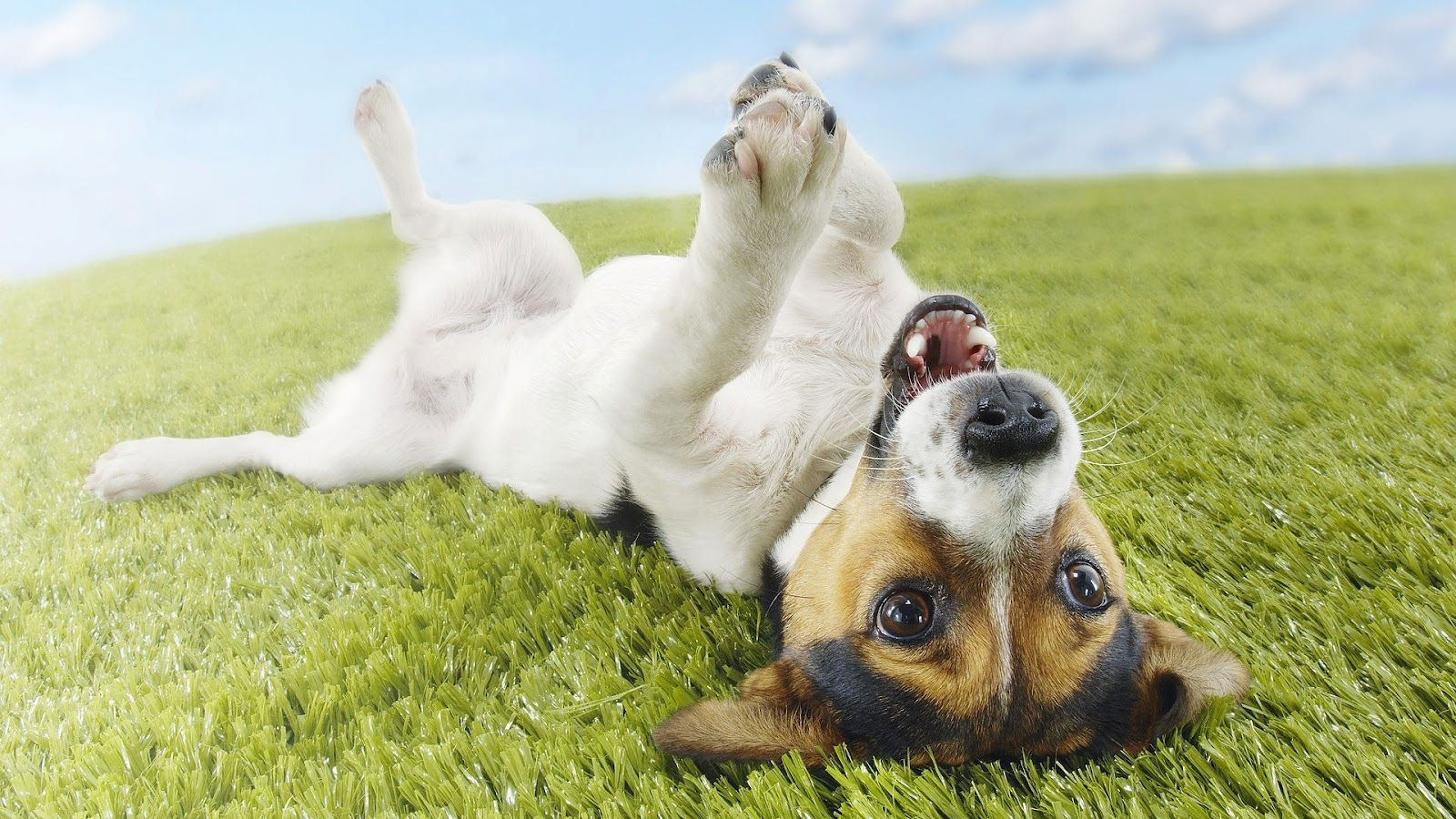 1600x900 HD Dogs Wallpapers and Photos | HD Animals Wallpapers