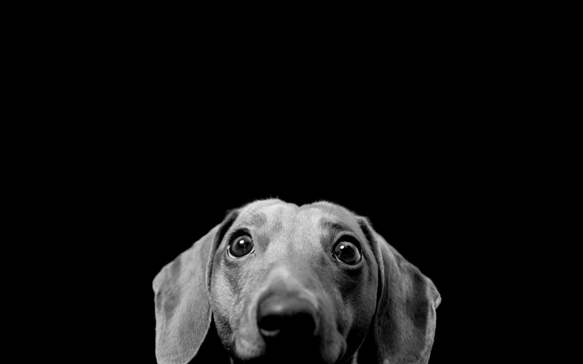 1920x1200 Pin by Brankica on Sweet animals <3 | Dog wallpaper, Funny dog ...