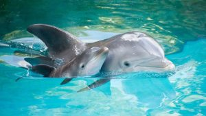 Baby Dolphin Wallpapers – Top Free Baby Dolphin Backgrounds