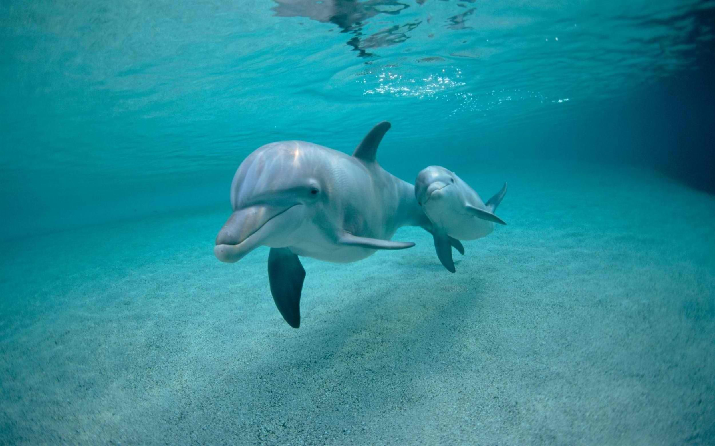 2500x1562 Baby Dolphin HD Wallpaper, Background Images