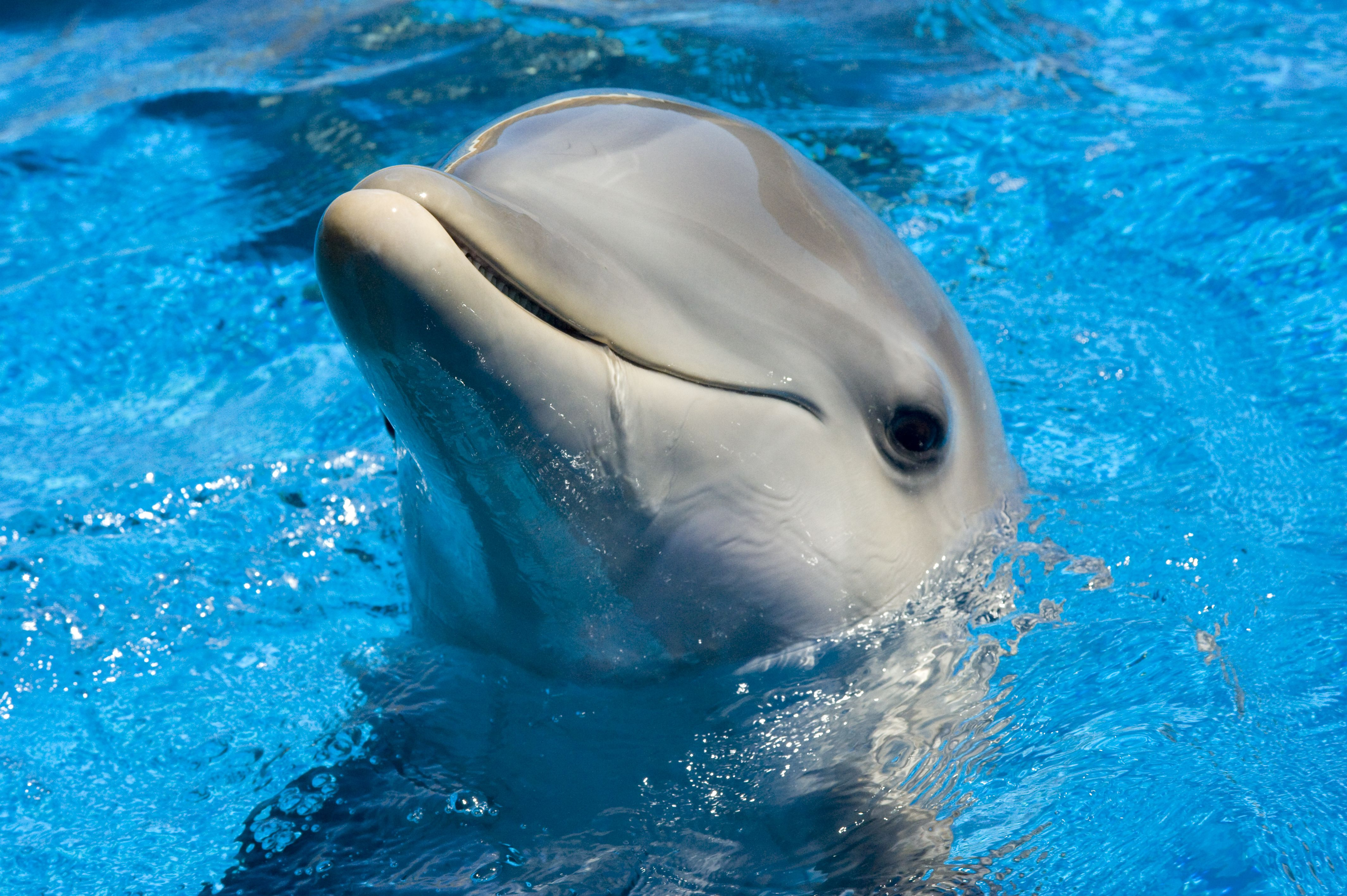 4256x2832 Dolphin Wallpaper - Wallpapers Browse