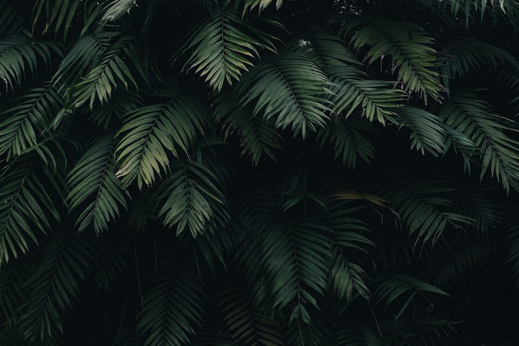 1730x1155 10 Tropical Jungle iPhone X Wallpapers | Preppy Wallpapers