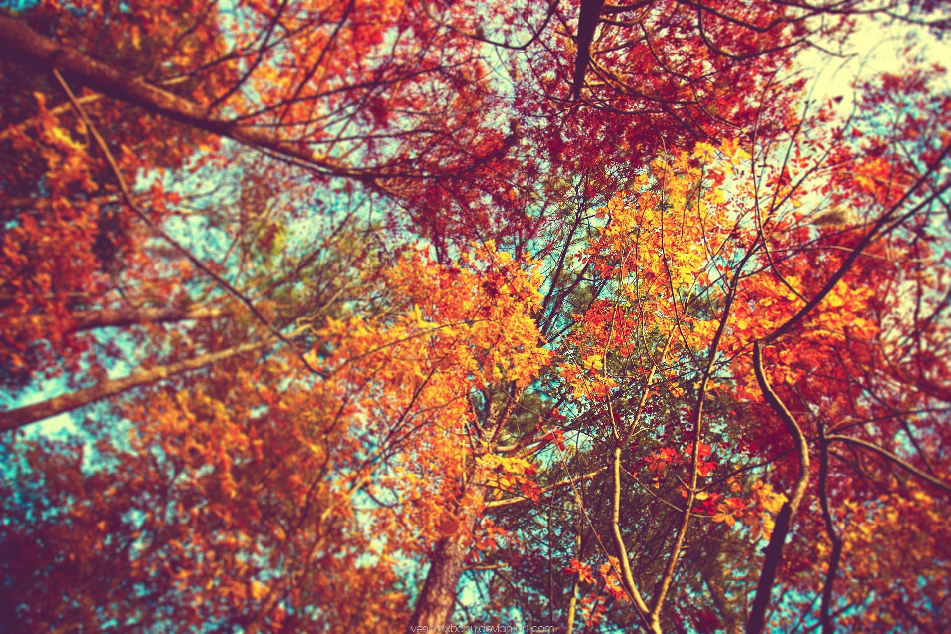 1920x1280 Autumn Tumblr Wallpapers 1080p with High Definition Wallpaper ...