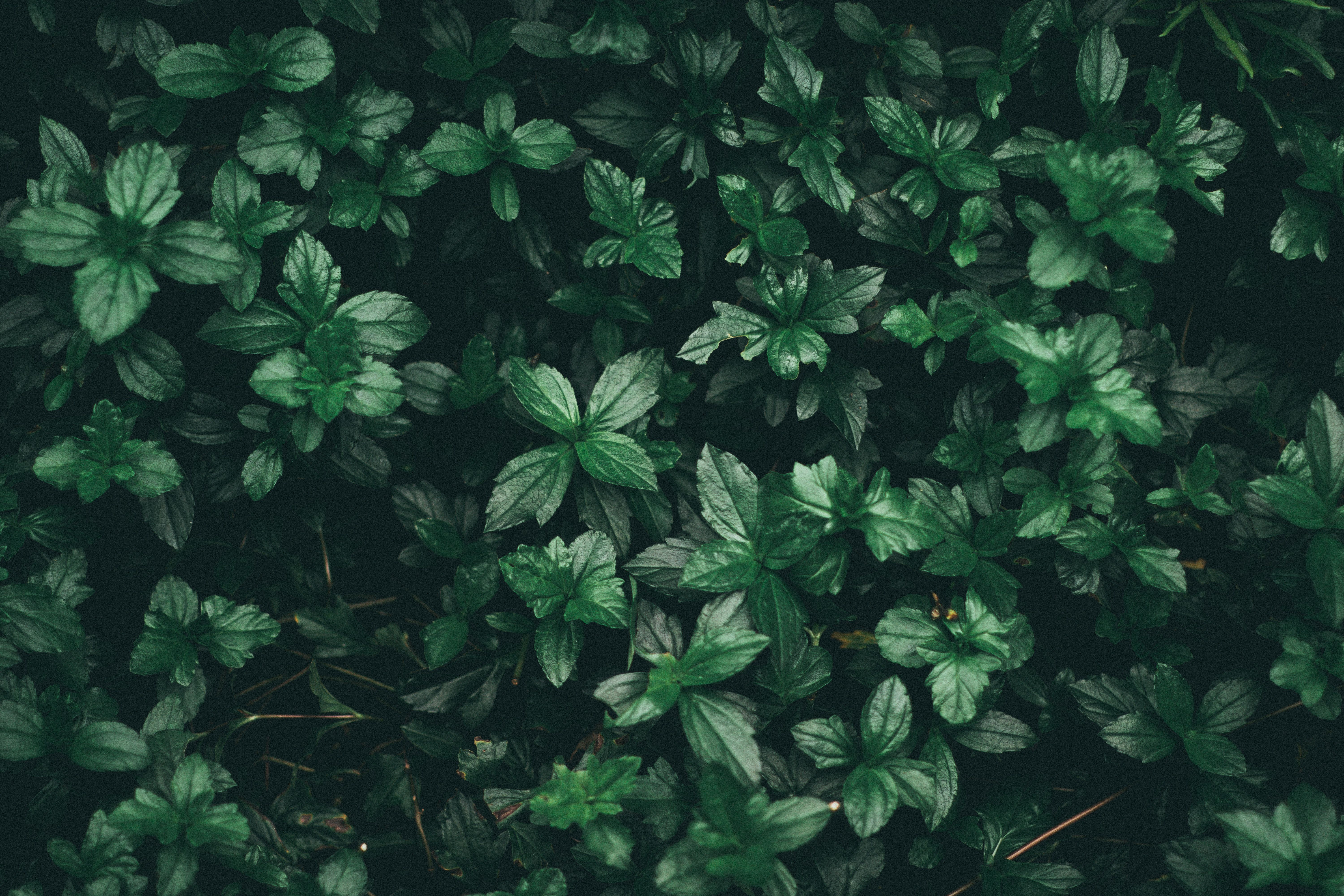 6000x4000 Green Leaf Plant · Free Stock Photo