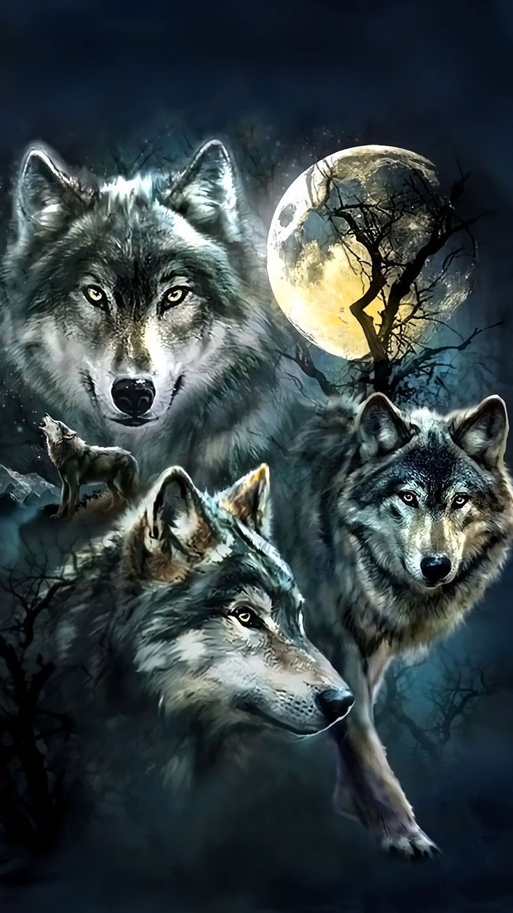 736x1308 Wolf Wallpaper For iPhone | Animals | Wolf, Wolf wallpaper e Wolf ...