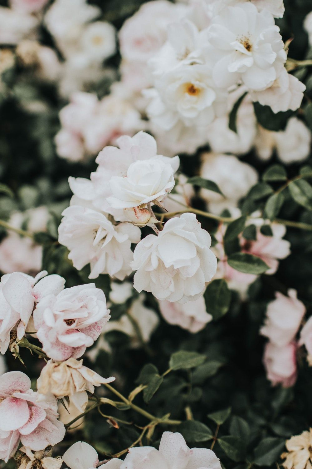 1000x1500 100+ White Flower Pictures   Download Free Images on Unsplash