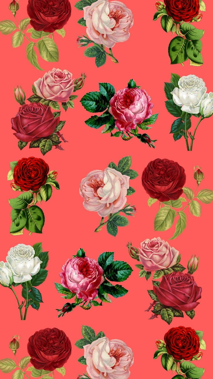 736x1308 Colorful Painting Roses Flowers Floral Flower Hd Wallpaper for ...