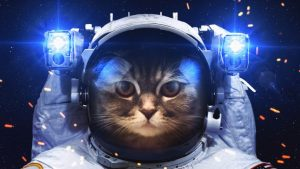 Astronaut Cat Phone Wallpapers – Top Free Astronaut Cat Phone Backgrounds