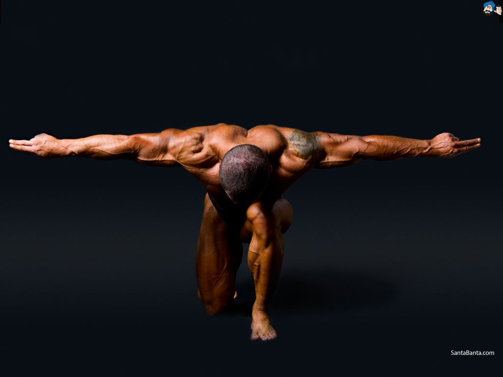 1024x768 Bodybuilder Wallpapers, 100% Quality Bodybuilder HD Backgrounds ...