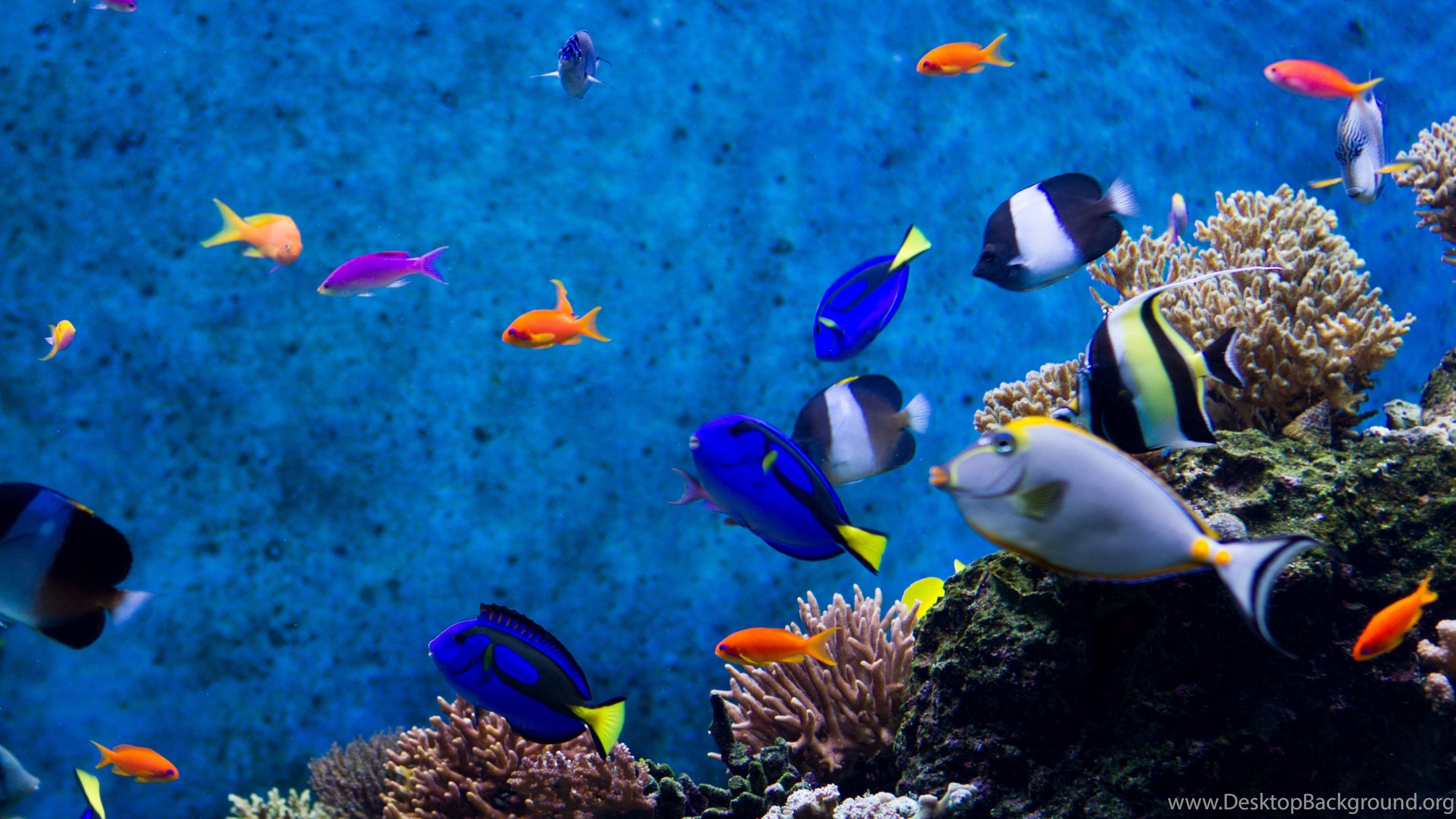 3840x2160 Aquarium Fishes Wallpapers :: HD Wallpapers Desktop Background