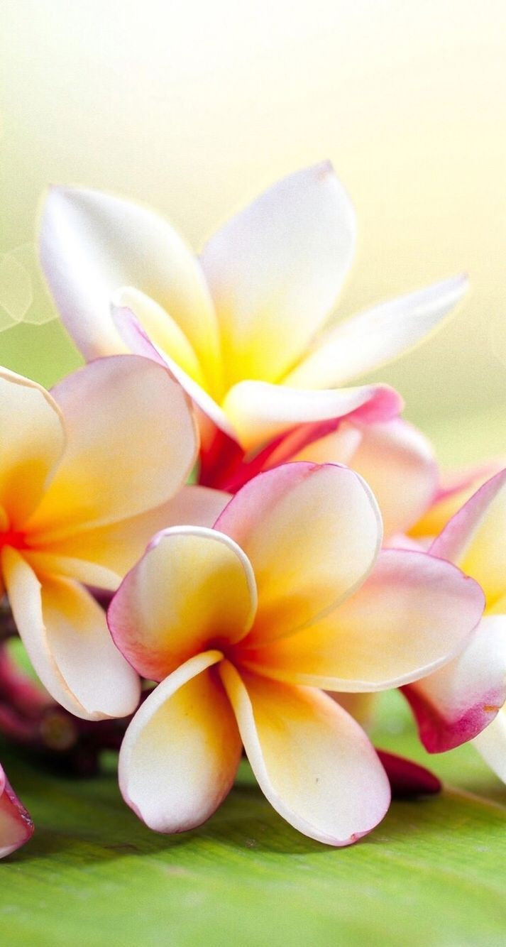713x1334 iPhone wallpaper flowers | Nature, paintbrush and powers | Pinterest ...