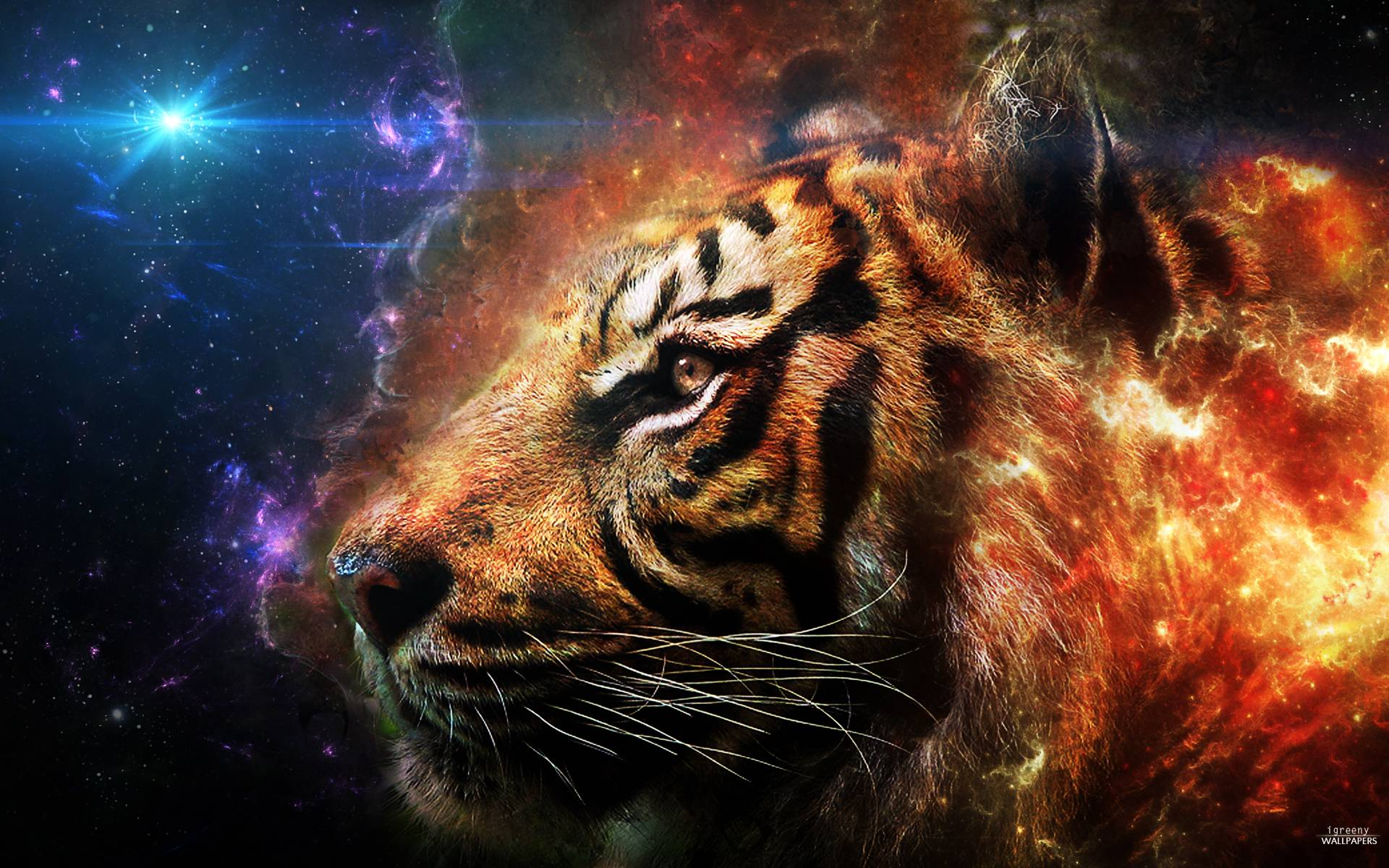 1920x1200 Tiger Galaxy Wallpapers, Tiger Wallpapers   HD Wallpapers Top