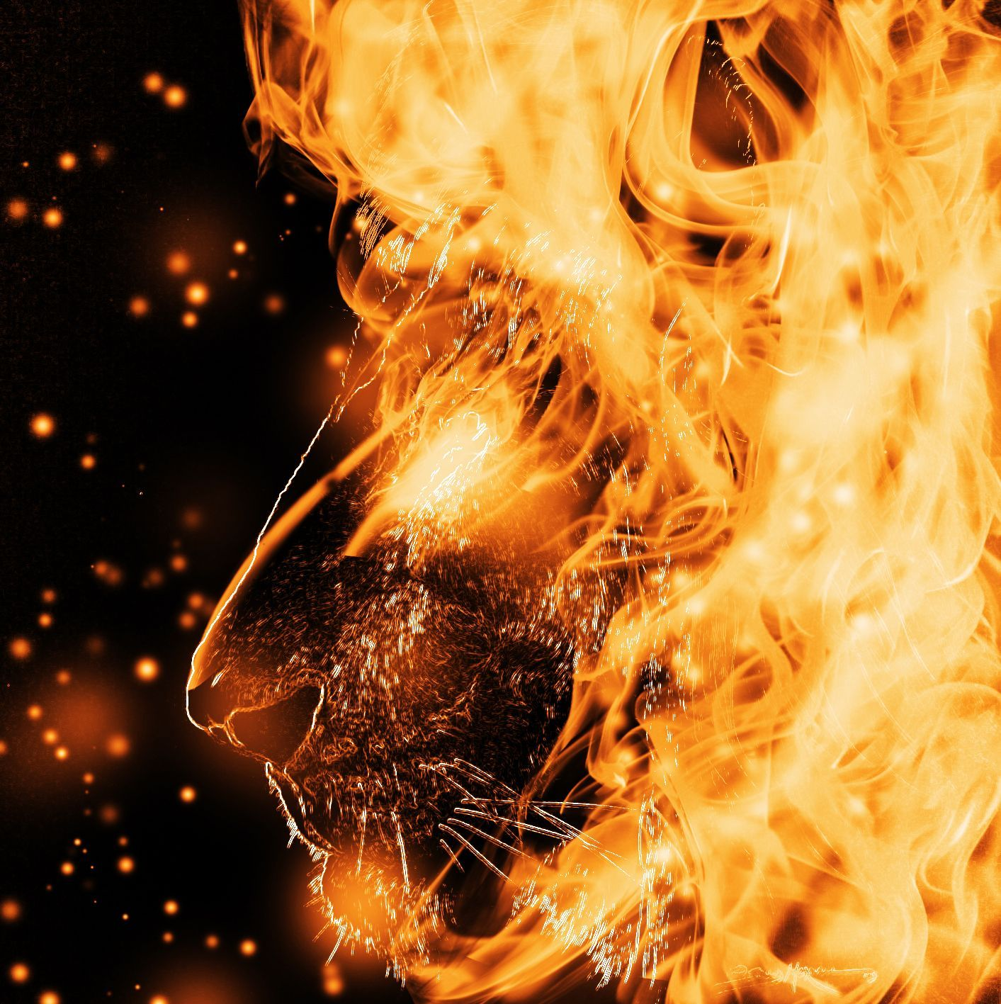 1413x1417 Fire Lion Wallpapers