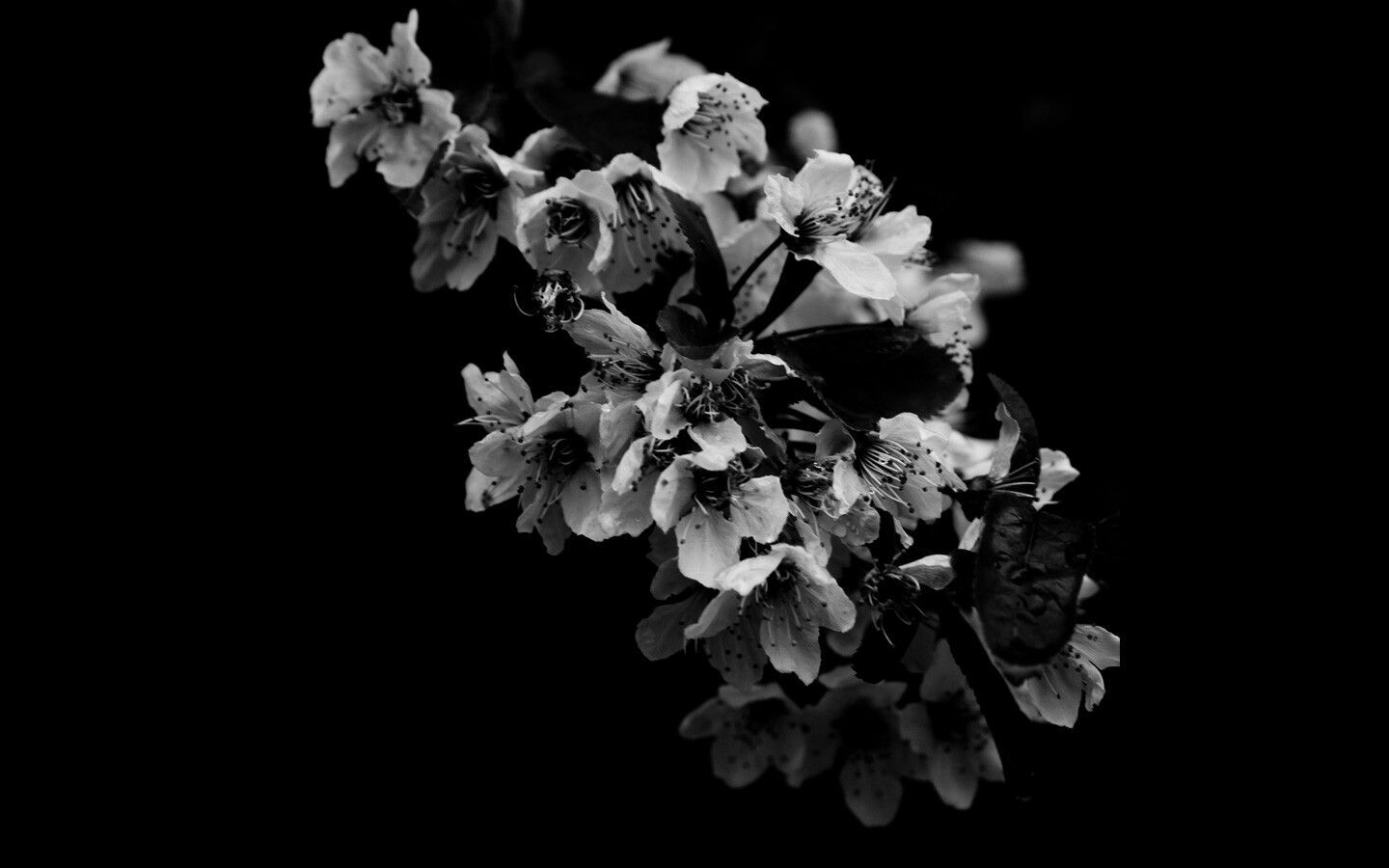 1440x900 Pin by Vanessa Rojas on ▩Black and White Beauty▦   Pinterest