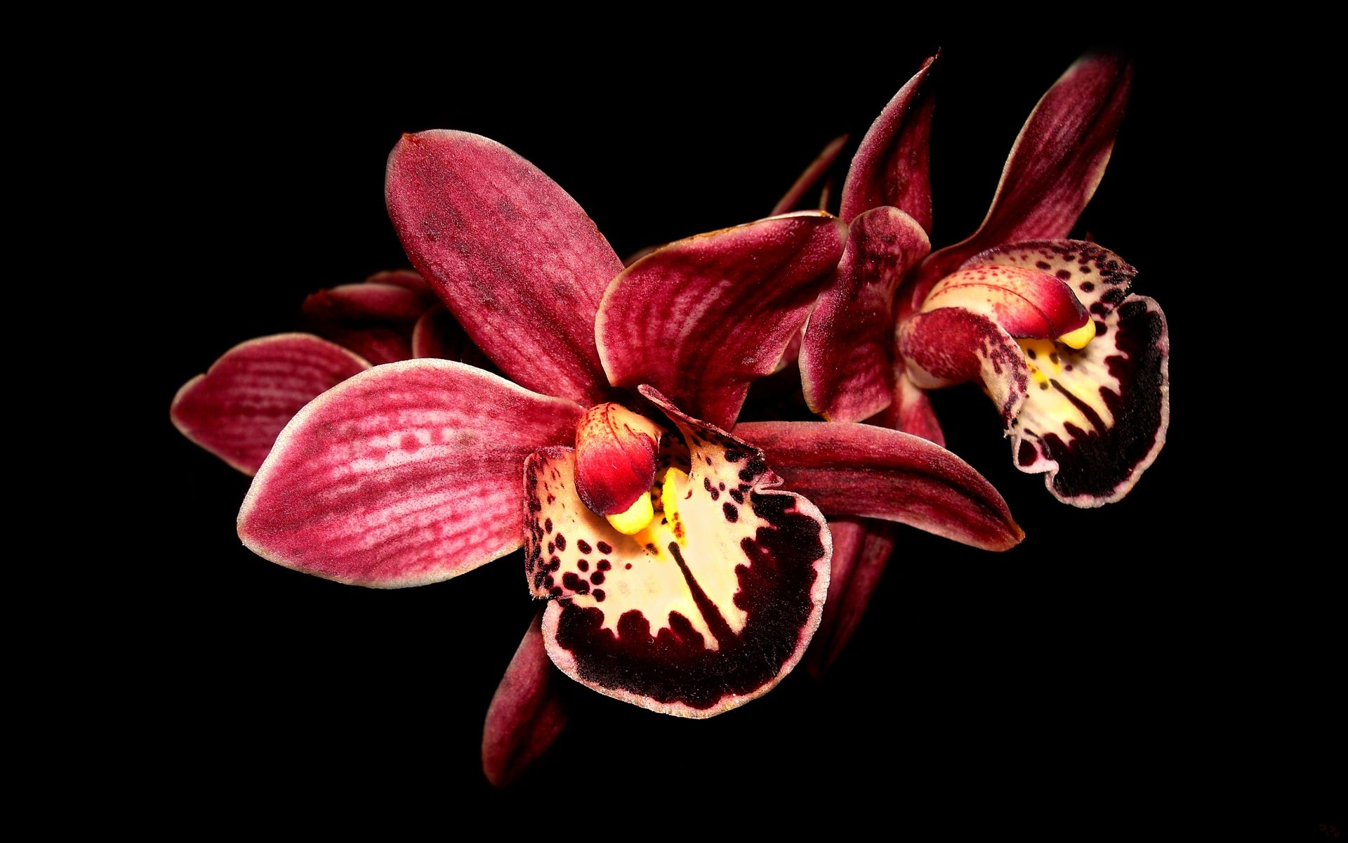 1920x1200 Orchid Wallpaper (48+ images) on Genchi.info