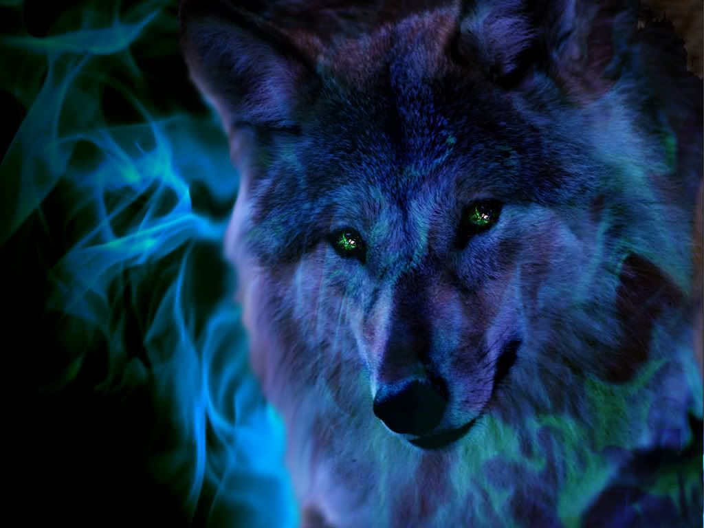 1024x768 Fire Wolf Wallpaper (29+ images) on Genchi.info