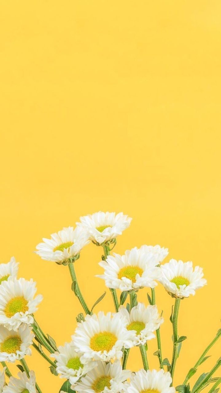 720x1280 Yellow flowers | Maharestu | Pinterest | Yellow flowers, Wallpaper ...
