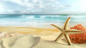 Starfish Wallpapers – Top Free Starfish Backgrounds