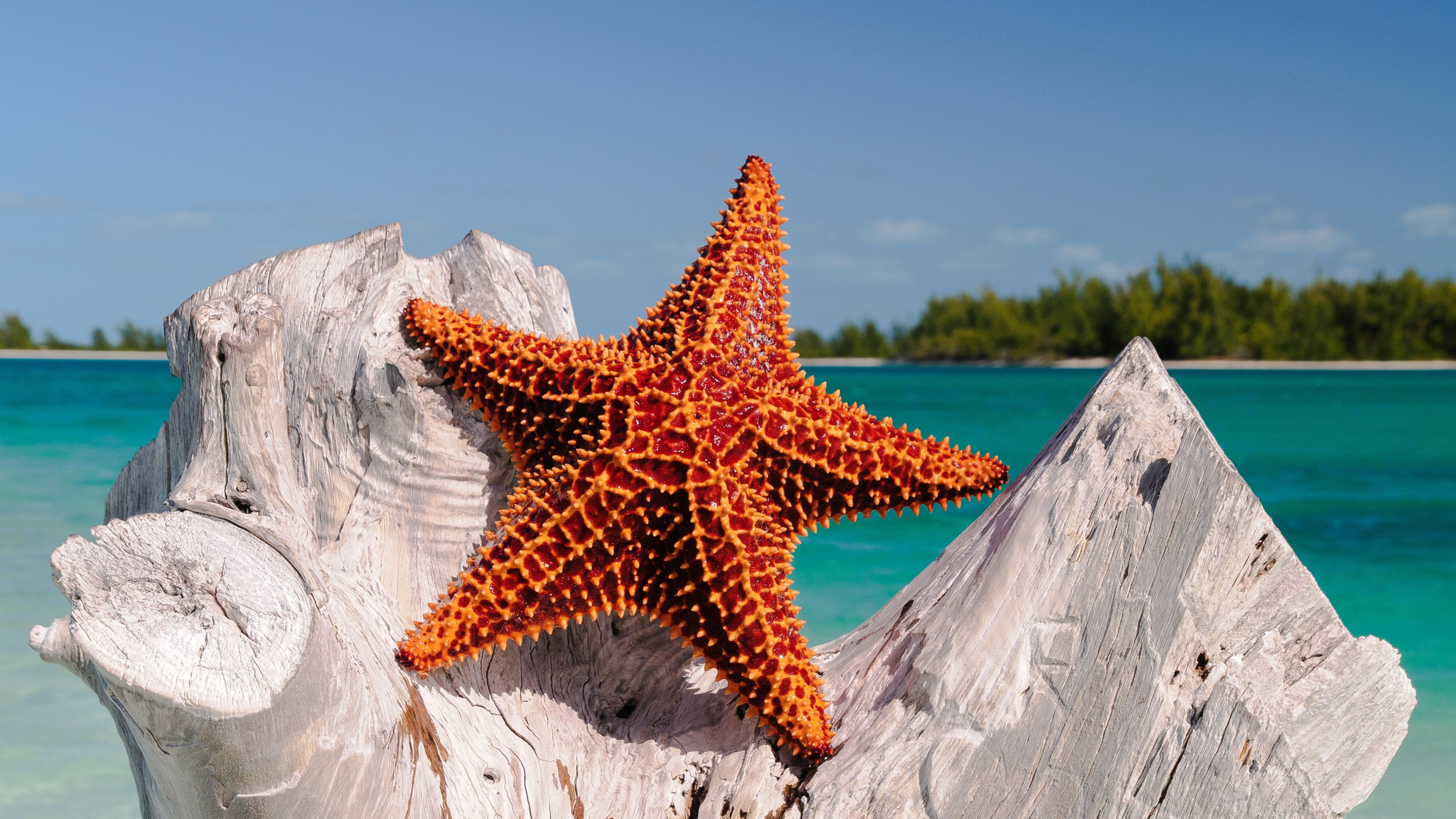3840x2160 Starfish Wallpapers, Pictures, Images
