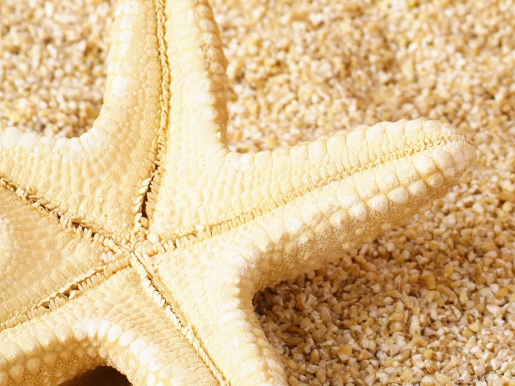 1024x768 Awesome Starfish Wallpapers High Definition Desktop Background
