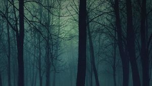 Eerie HD Nature Phone Wallpapers – Top Free Eerie HD Nature Phone Backgrounds