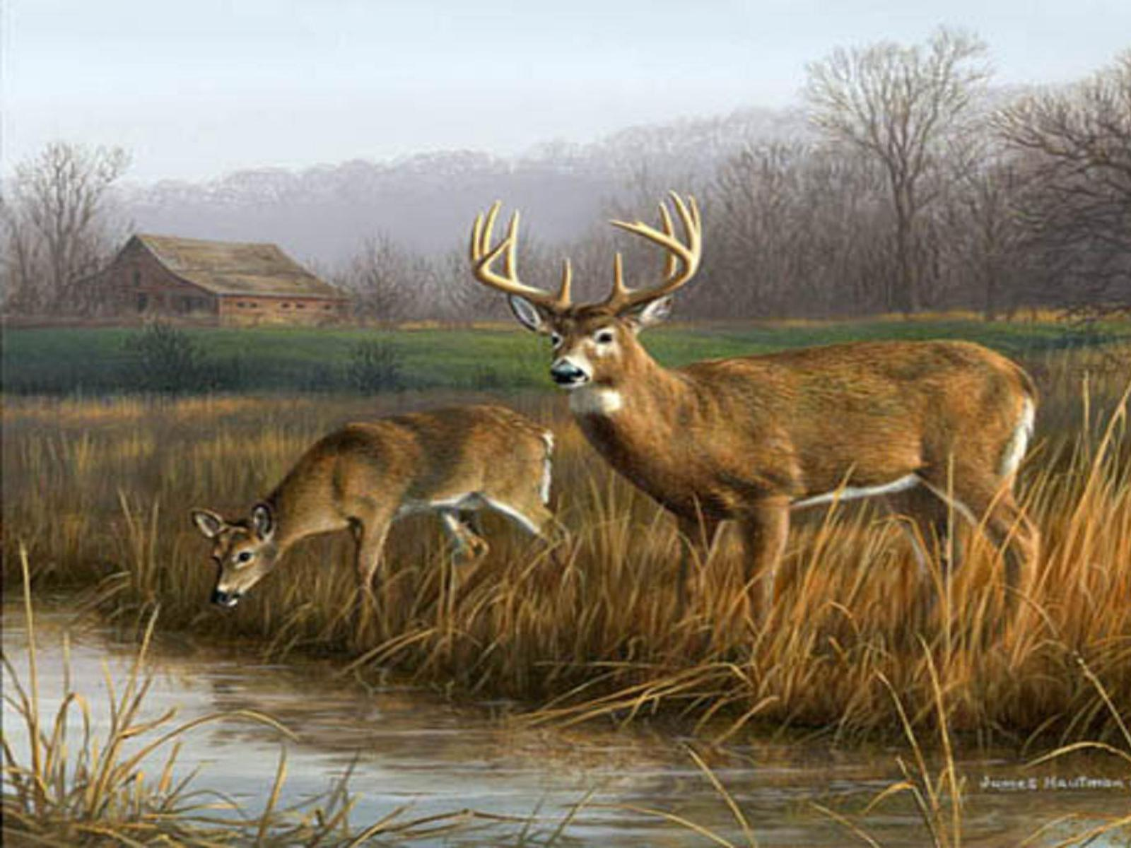 1600x1200 Whitetail Deer Backgrounds