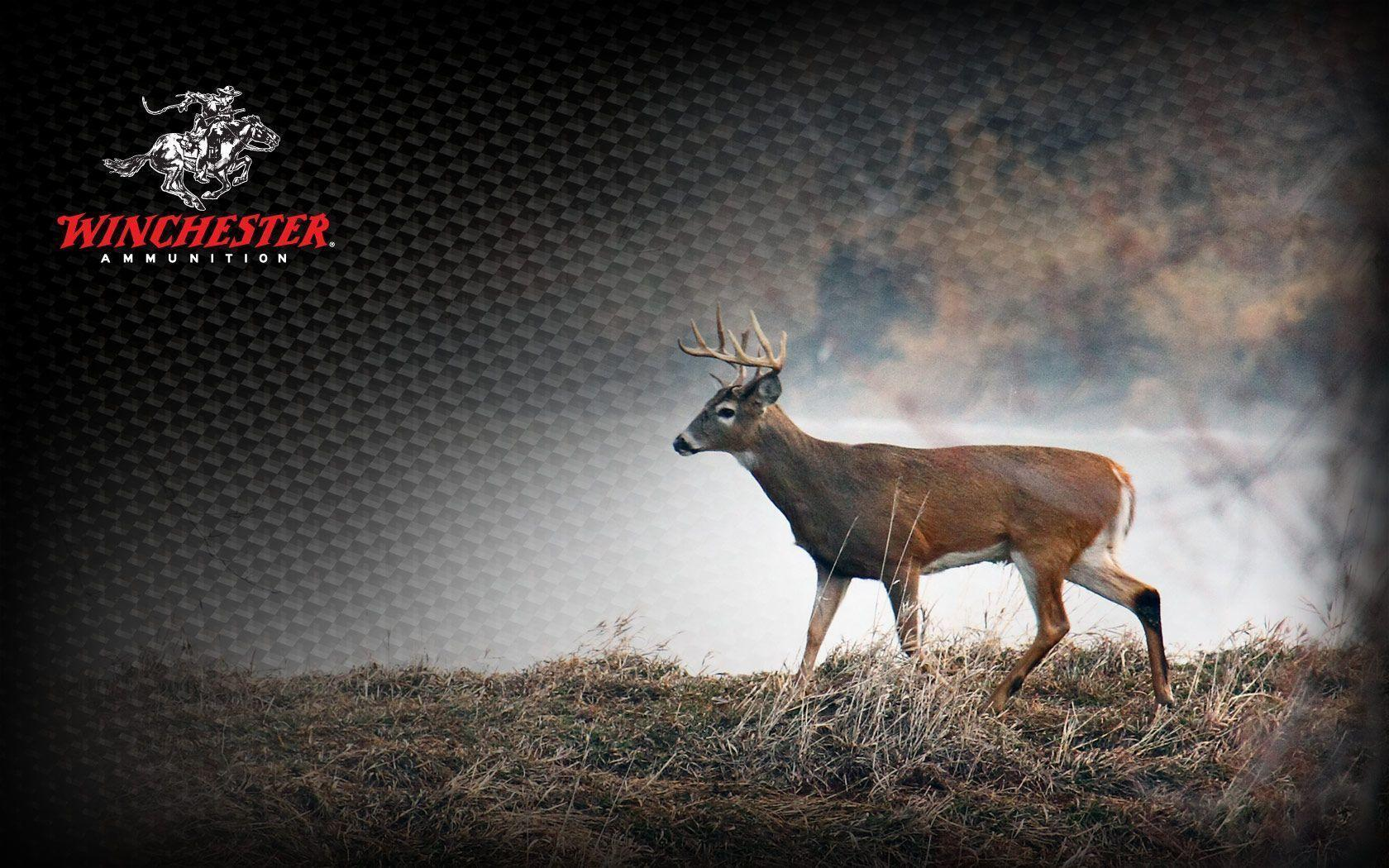 1680x1050 Deer Hunting Backgrounds