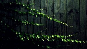 Green Vines Wallpapers – Top Free Green Vines Backgrounds