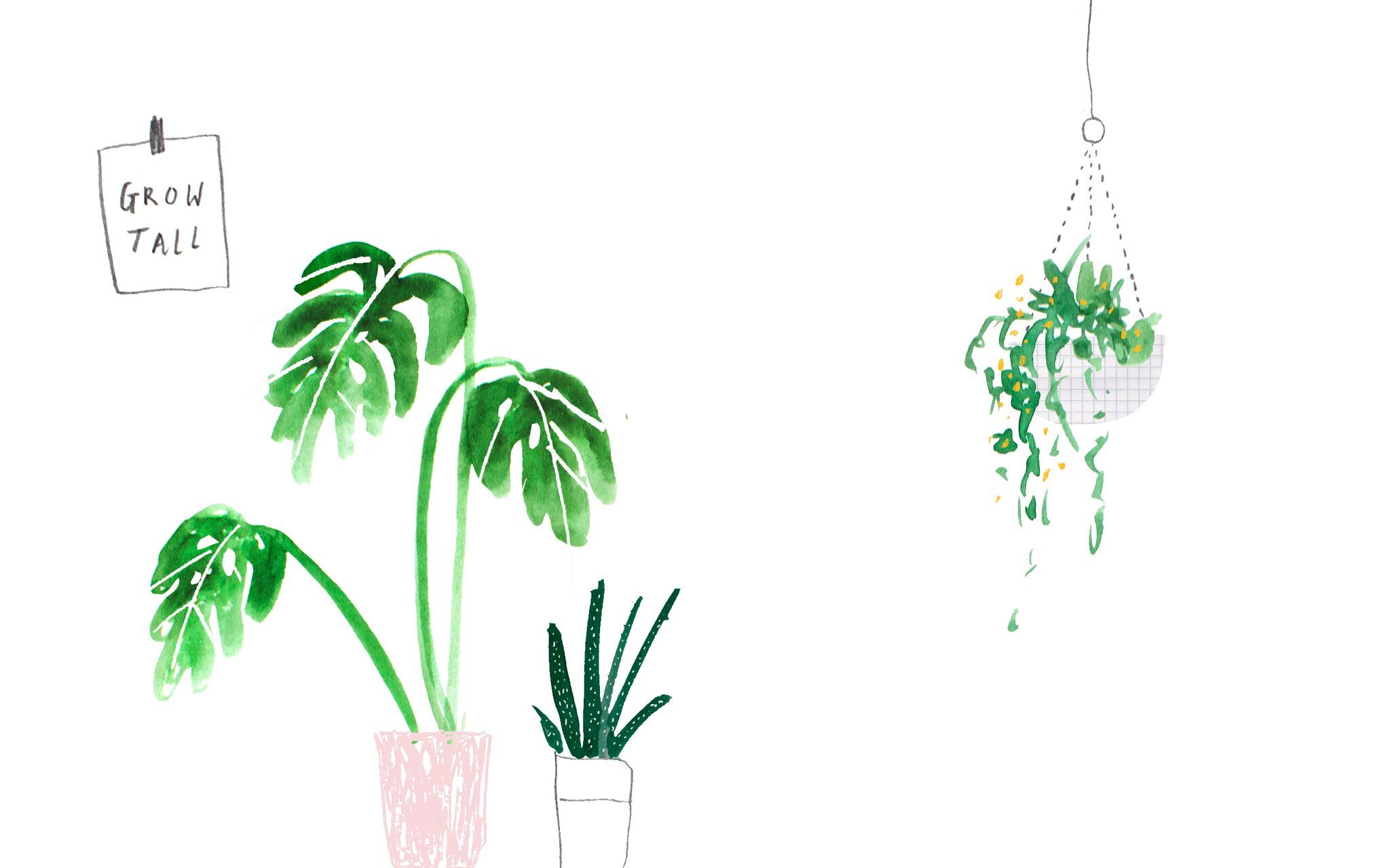 2048x1280 Green pink illustrated watercolour plants palms desktop wallpaper ...