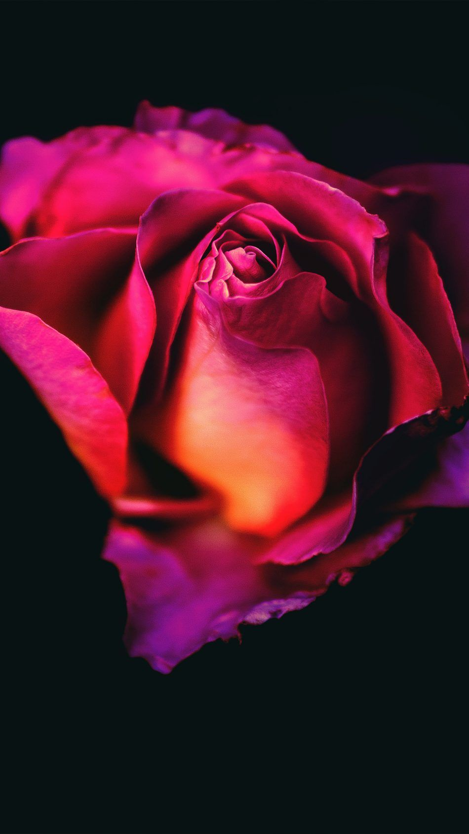 950x1689 Download Rose Flower Dark Background Free Pure 4K Ultra HD Mobile ...