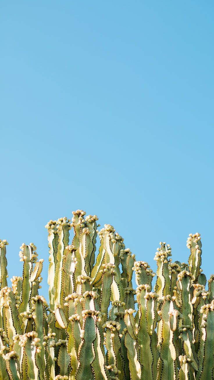 736x1308 Cactus Wallpaper for those Tumblr babes | wallpapers. | Pinterest ...