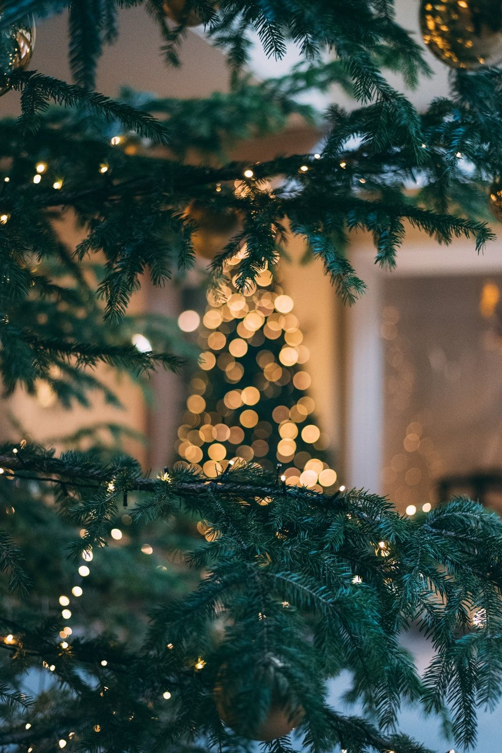 1000x1498 Christmas Tree Pictures [HQ]   Download Free Images on Unsplash
