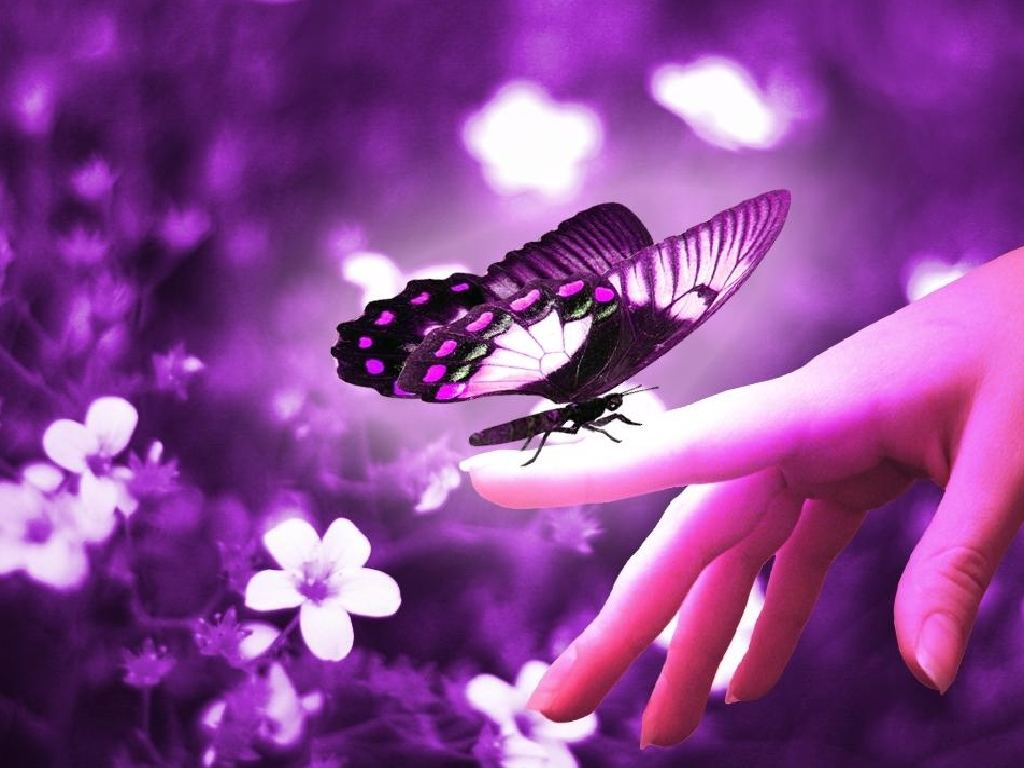 1024x768 Purple Butterfly Backgrounds Image