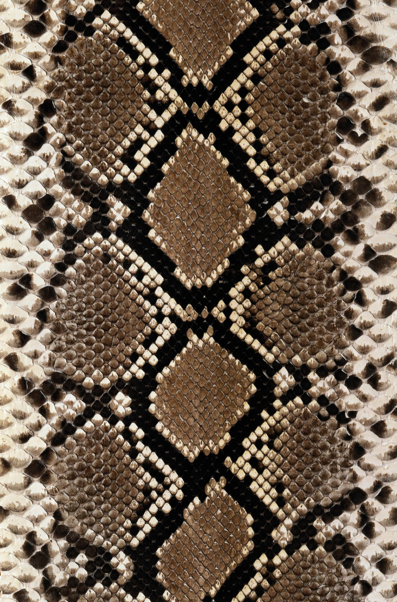1690x2560 python | Design - Animal Print | Pinterest | Texture, Snake skin and ...