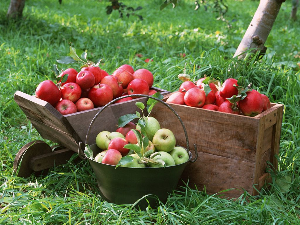 1024x768 Apple Tree Wallpaper - Wallpapers Browse