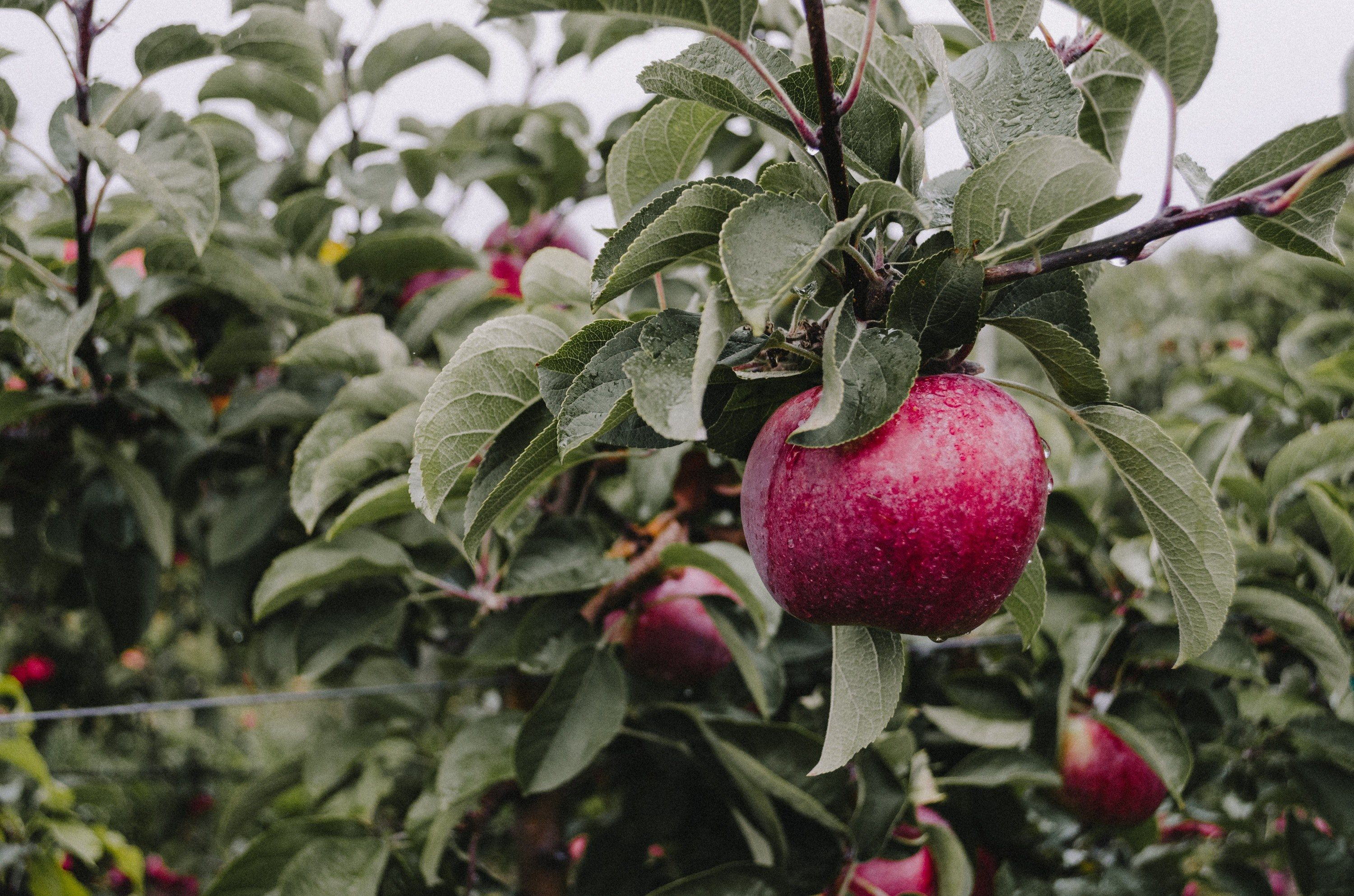 3000x1987 Free stock photos: #apple wallpapers and backgrounds